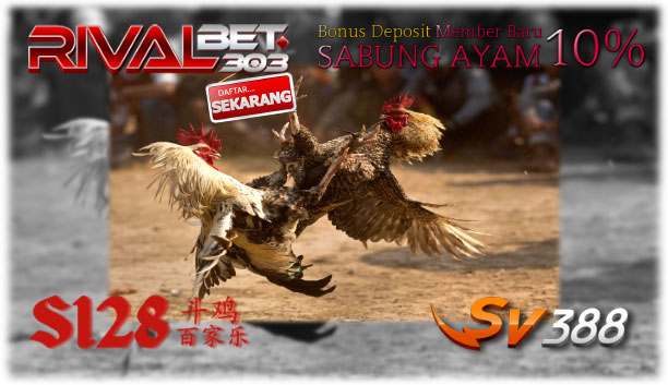 Situs Rivalbet303, Agen Sabung Ayam Recommended